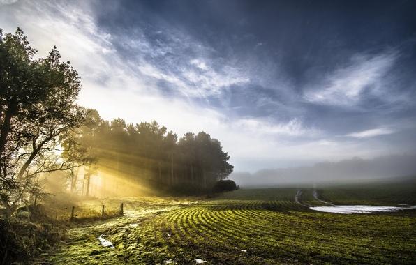 Картинка поле, свет, природа, весна, утро