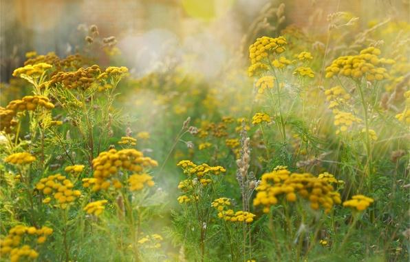 Картинки по запросу музыка лета, цветов и трав.
