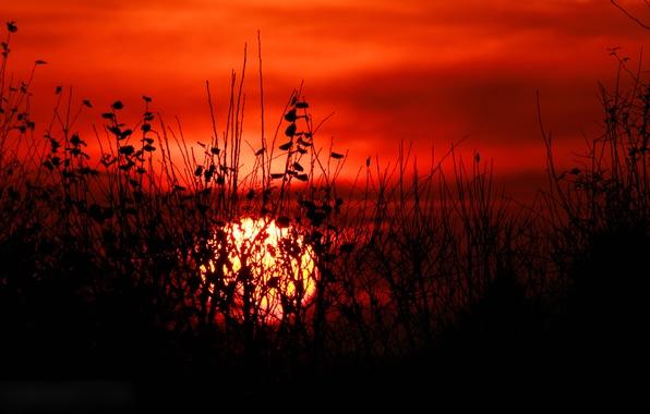 Картинка небо, трава, листья, солнце, облака, закат, растение, силуэт, кусты