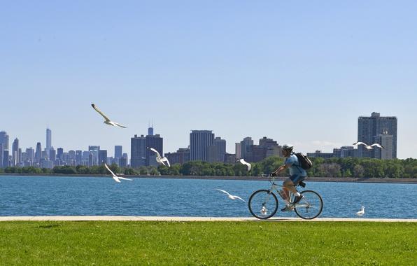 Картинка небо, трава, деревья, птицы, велосипед, река, газон, чайки, дома, Чикаго, дорожка, шлем, мужчина, США, прогулка, …