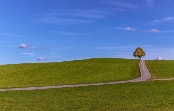 Картинка дорога, поле, небо, облака, дерево, холмы