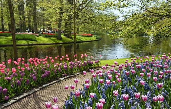 Картинка лето, вода, цветы, пруд, тюльпаны, Парк, Нидерланды, Netherlands, Keukenhof, Garden of Europe