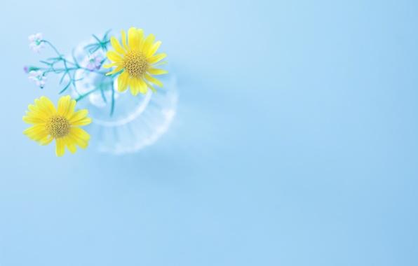 Картинка цветы, желтый, фон, голубой, widescreen, обои, ваза, wallpaper, цветочки, широкоформатные, flowers, background, полноэкранные, HD wallpapers, ...