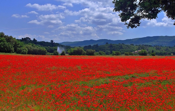 Картинка поле, небо, трава, деревья, цветы, горы, холмы, маки, луг, панорама