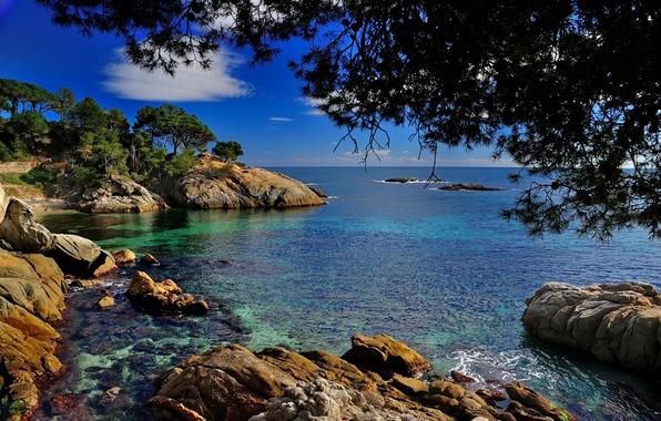 Картинка ветки, камни, побережье, Испания, Spain, Каталония, Средиземное море, Costa Brava, Catalonia, Castell-Platja d'Aro, Коста Брава