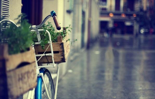 Картинка зелень, трава, цветы, велосипед, велик, город, фон, обои, улица, корзина, размытие, wallpaper, bicycle, корзинка, разное, …