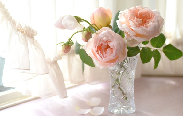 Цветы фоны для рабочего стола бесплатно  iKartinka the