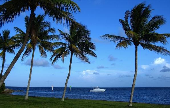 Картинка тропики, пальмы, побережье, Майами, Флорида, катер, Miami, Florida, Атлантический океан, Atlantic Ocean