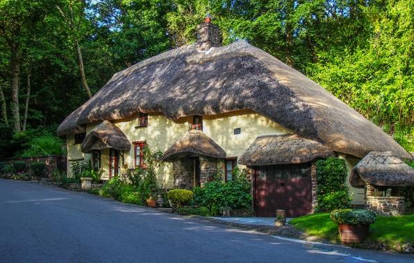 Фото обои цветы, дорога, Англия, кусты, деревья, дом, Northlew, лес, дизайн