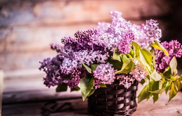 Картинка цветы, ветки, корзина, доски, сирень