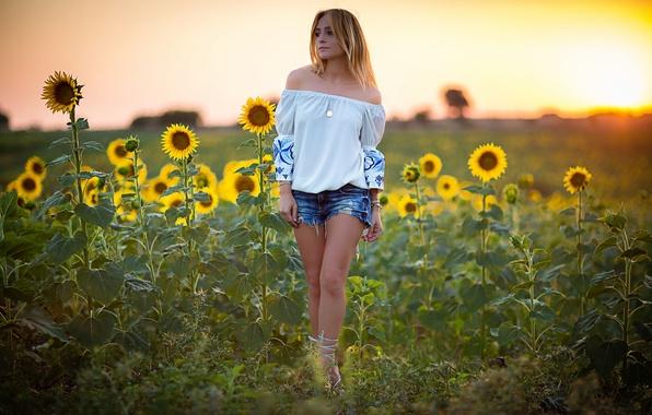 Картинка поле, лето, девушка, подсолнухи, шорты