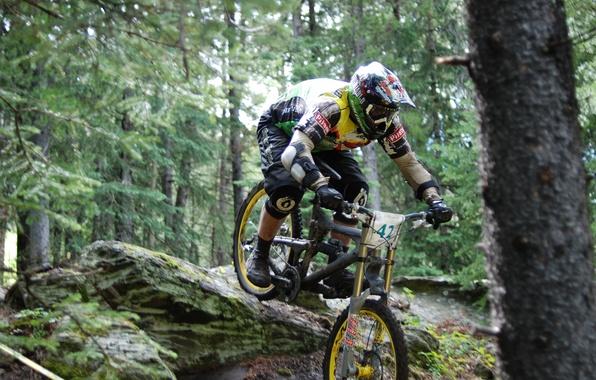 Картинка лес, велосипед, экстрим, downhill, даунхилл