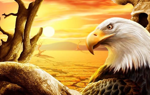 Картинка солнце, орел, пустыня, рисунок