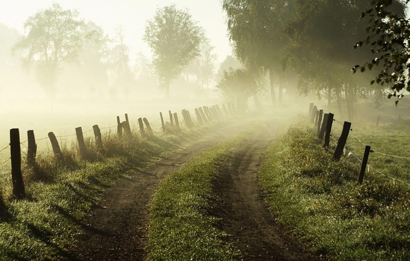 Картинка дорога, трава, деревья, природа, туман, рассвет, забор, ограда, Утро
