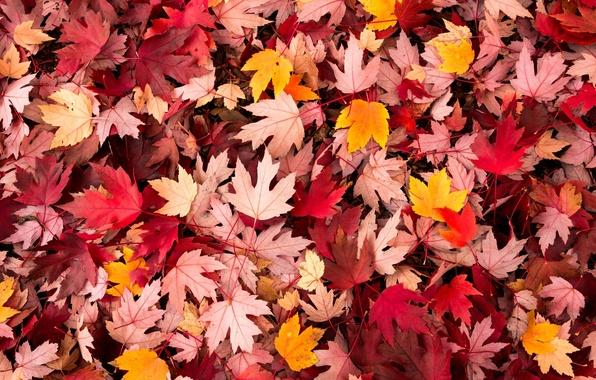 Картинка осень, листья, макро, фон, widescreen, обои, wallpaper, листочки, листопад, широкоформатные, background, autumn, leaves, macro, полноэкранные, …