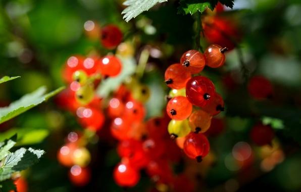 Картинка природа, ягоды, berry, nature, смородина, currant
