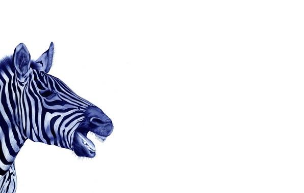 Картинка белый, фон, черно-белый, зебра, нарисованная