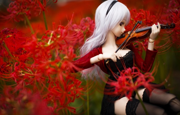 Картинка цветы, скрипка, игрушка, кукла