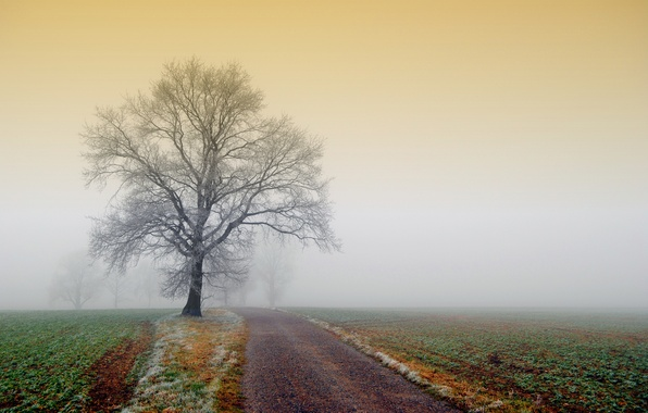 Картинка иней, дорога, поле, природа, туман, дерево