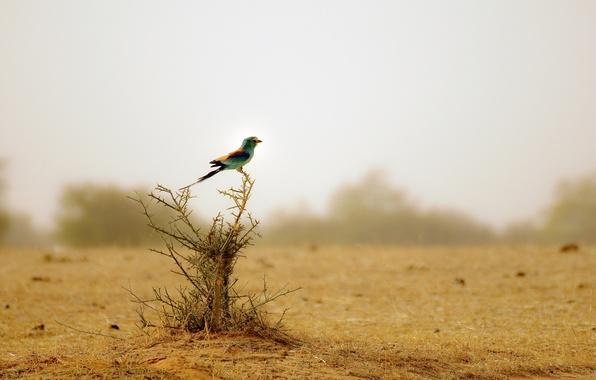 Картинка птица, куст, animals