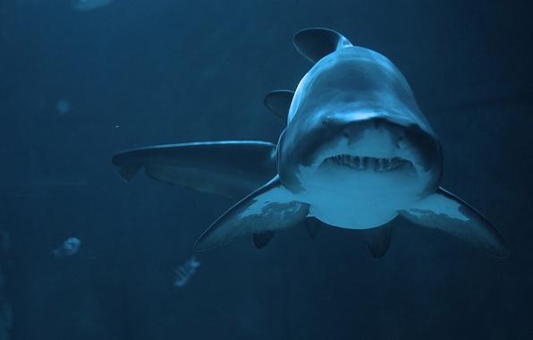 Картинка хищник, акула, глубина