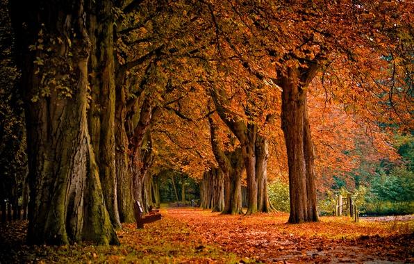 Картинка осень, лес, листья, деревья, пейзаж, природа, парк, лавочка, листопад, скамья
