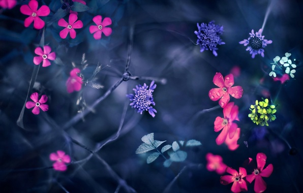 http://img1.goodfon.ru/wallpaper/big/1/98/cvety-priroda-montazh-3475.jpg