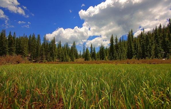 Картинка поле, лес, небо, трава