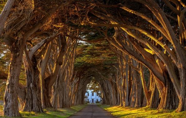 Картинка лето, light, california, аллея, trees, sunset, tree, station, tunnel, поместье, леревья, point, cypress, marconi, reyes