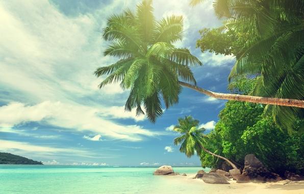 Картинка песок, море, пляж, солнце, тропики, океан, берег, остров, summer, beach, sea, ocean, coast, paradise, tropical, …