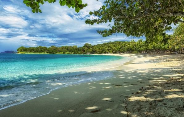 Картинка пляж, вода, деревья, камни