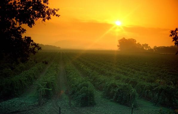 Картинка поле, небо, солнце, дерево, вечер