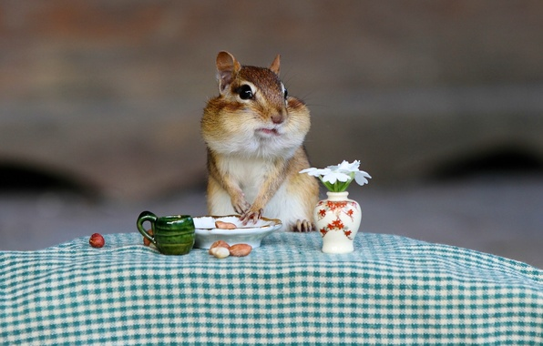 Картинка ситуация, завтрак, бурундук, зверёк
