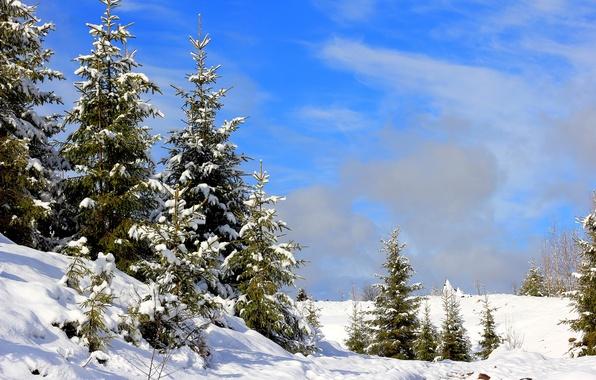 Картинка зима, снег, поляна, елки, сугробы, Россия, Урал