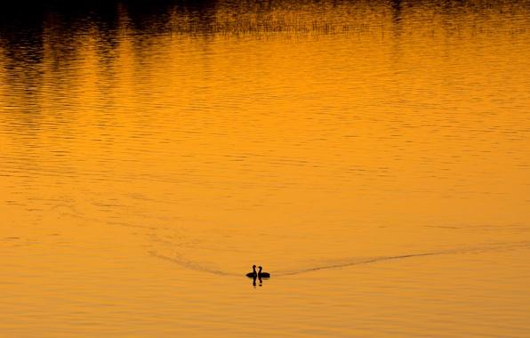Картинка птицы, ночь, озеро