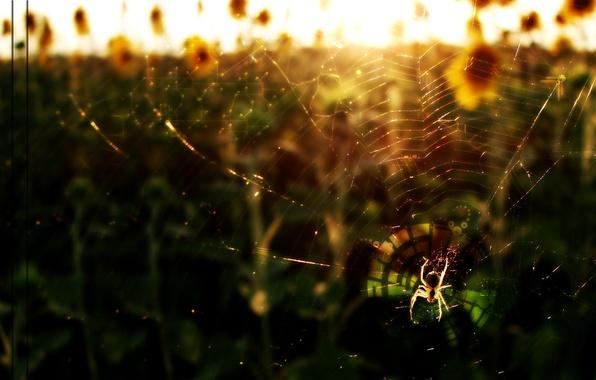 Картинка паутина, схема, Паук