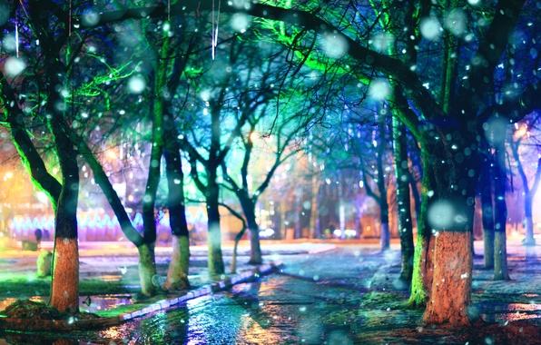 Картинка деревья, дождь, вечер, аллея