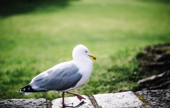 Фото обои перья, лапки, птица, чайка