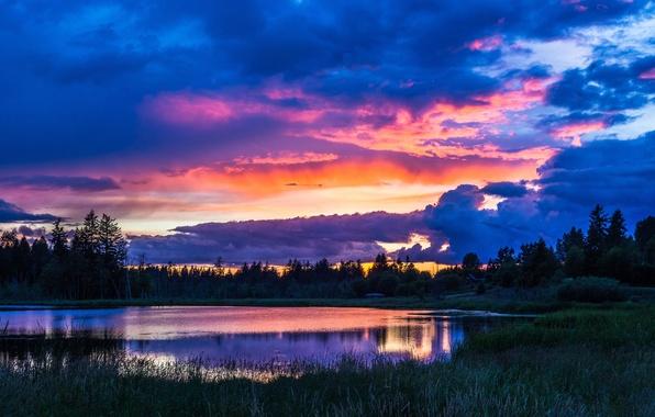 Картинка лес, небо, трава, вода, облака, деревья, пейзаж, природа, озеро