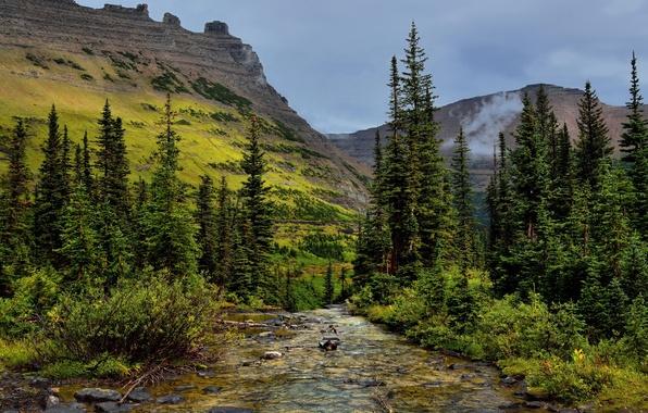 Картинка деревья, горы, ручей, камни, скалы, США, Glacier National Park