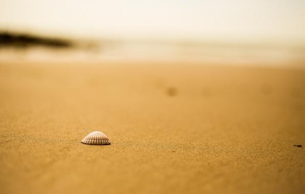 Картинка песок, пляж, ракушка, боке