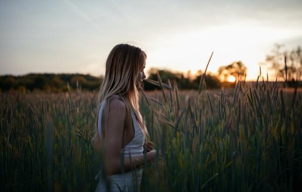 Картинка поле, девушка, лицо, рассвет, прогулка, Brittney