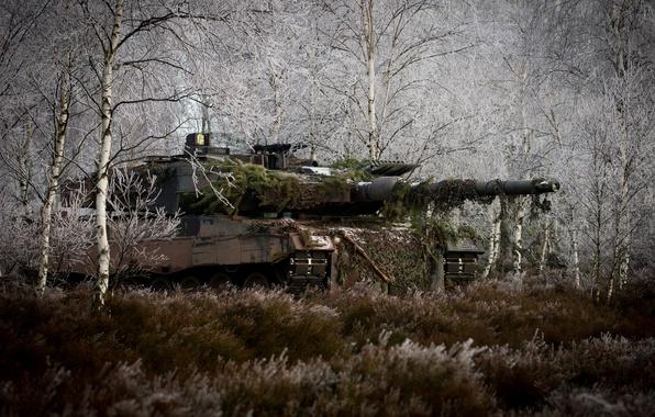 Картинка лес, трава, деревья, танк, маскировка, боевой, Leopard 2A6M