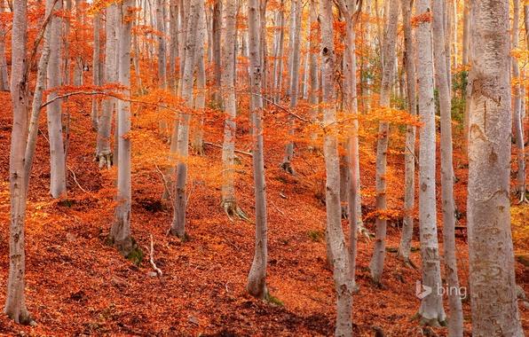 Картинка осень, листья, деревья, склон, Испания, осина, Сарагоса, природный парк Дехеса де Монкайо
