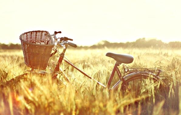 Картинка пшеница, поле, солнце, природа, велосипед, фон, обои, корзина, настроения, рожь, wallpaper, колосья, bicycle, солнечный день, …