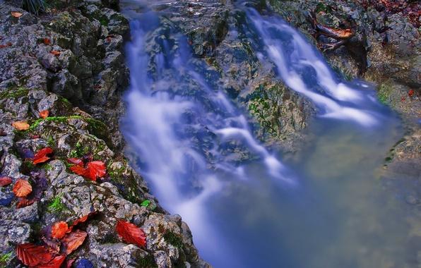 Картинка осень, листья, вода, ручей, камни, поток