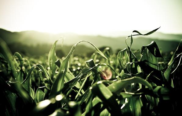 Картинка зеленый, Листья, Растения