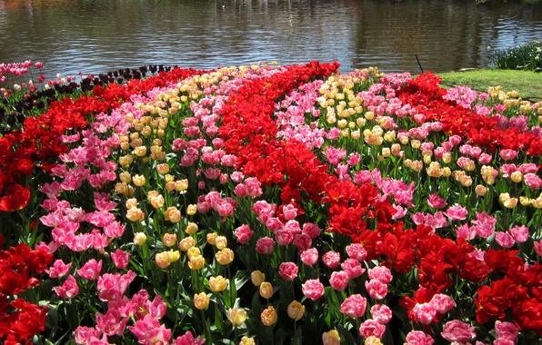 Картинка пруд, сад, тюльпаны, Нидерланды, разноцветные, Keukenhof Gardens