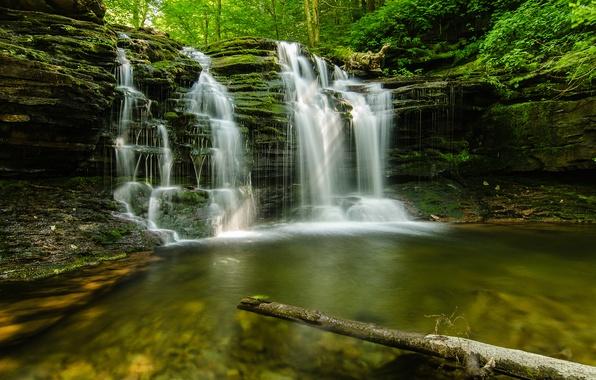 Картинка лес, лето, природа, ручей, камни