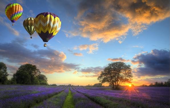 Картинка небо, облака, пейзаж, закат, природа, field, flowers, balloons